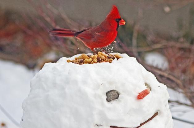 #3 Cardinal on Snowman